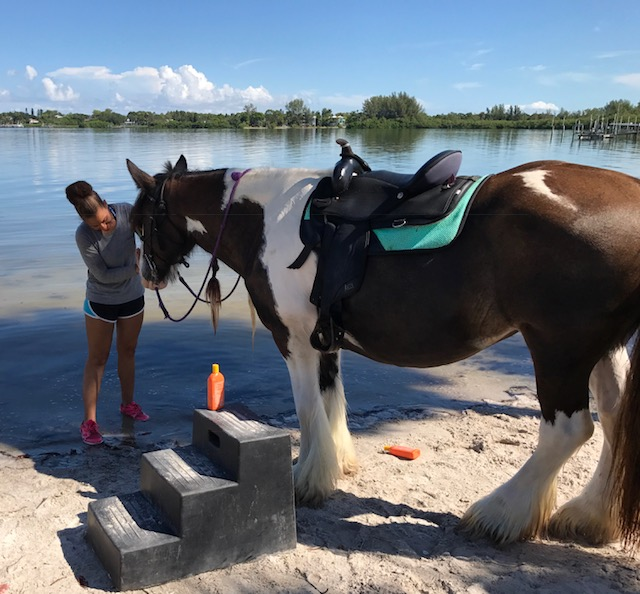Beach Horseback Riding Anna Maria Island